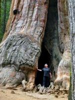 sequoia-tree-53188_640