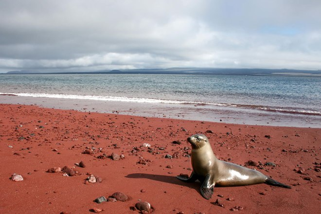 http://500px.com/photo/51025678/sea-lion-at-playa-roja-by-robert-peternel