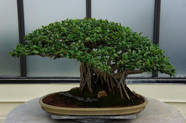 plant-658637_640